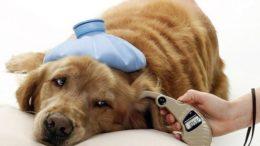Диабет у животных