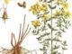 Сбор лекарственных растений