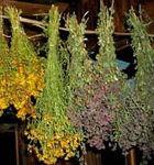 Сушильня лекарственных растений