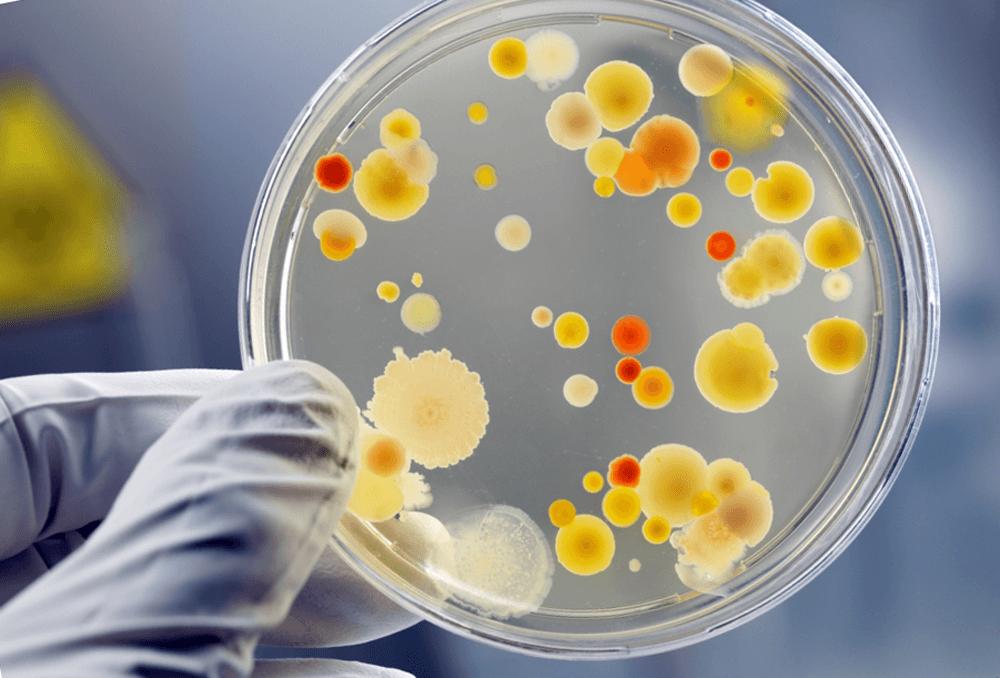 Очищение организма от токсинов
