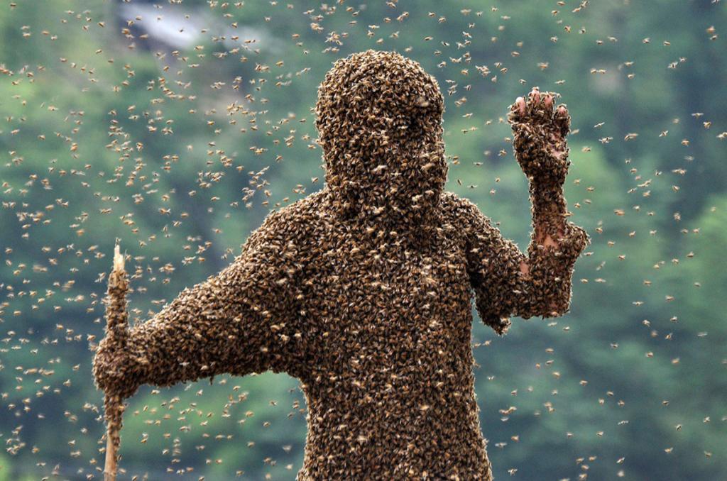 Пчелиный яд как лекарство